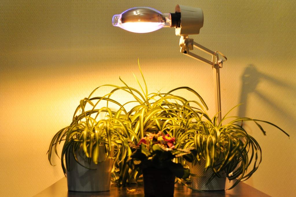 Лампы для комнатных цветов купить