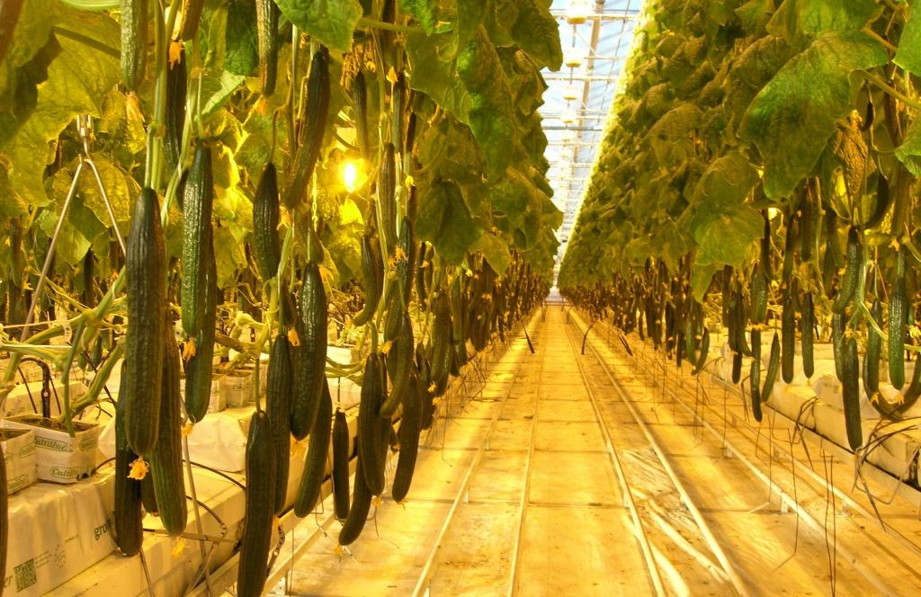 светодиодная фитолампа для растений купить киев
